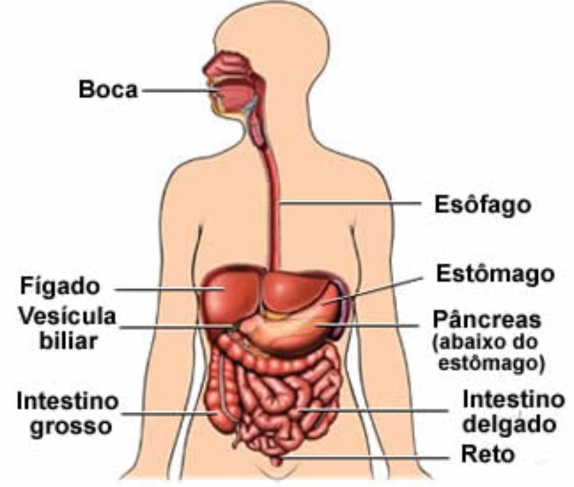 corpo Humano | Pagina principal